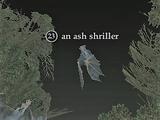 An ash shriller