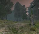Nektulos Forest
