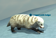A rugged arctic badger