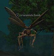 A tarantula hawk