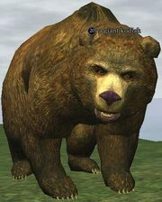 A giant kodiak