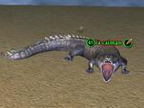 A caiman