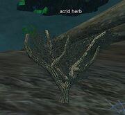 Acrid herb