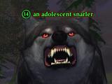An adolescent snarler