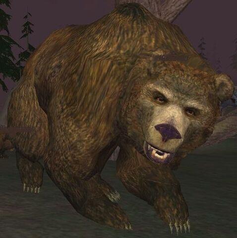 File:Race bear.jpg
