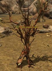 A bark-stripped treant