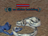 An albino hatchling (The Tombs of Night: A Search For Answers)