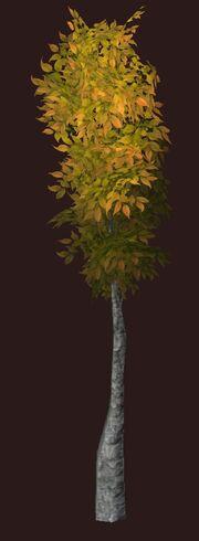 Autumnal Goldleaf Seedling visible