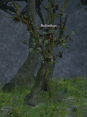 Rulinthus