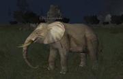 A war elephant (Commonlands)