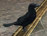 A mysterious raven