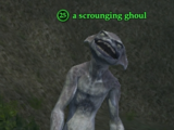 A scrounging ghoul