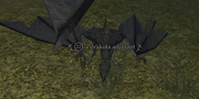 A drakota adjutant