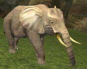 Race elephant