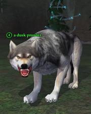 A dusk prowler