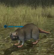 A puny scavenger