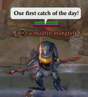 A mudfin mongrel