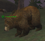 A young kodiak (Darklight Wood)