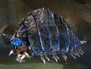 Race hive queen
