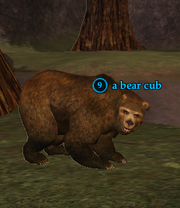 A bear cub (Oakmyst Forest)
