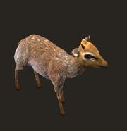 Grove Deer Placed