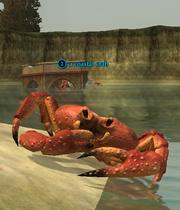 A coastal crab