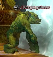 A Barkgut gatherer