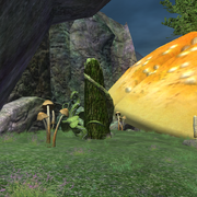 The Mossy Stump