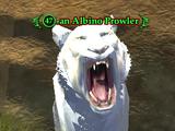 An Albino Prowler