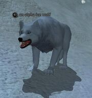 An alpha ice wolf