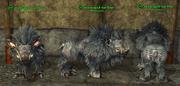 Boar (Berserker) Placed
