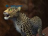 A sandfang prowler (solo)