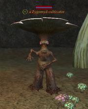 A Zygomyd cultivator