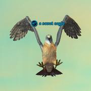 A scout eagle