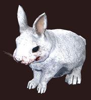 A were-rabbit