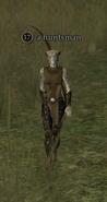 A huntsman (kerran)