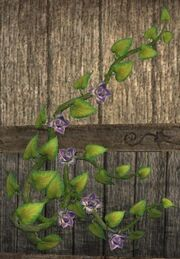 Wall-clinging vine (Visible)