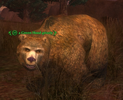 A Green Hood grizzly