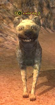 A wild dog