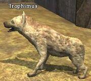 Trophimus