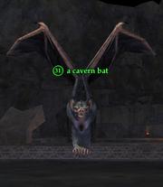 A cavern bat