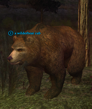 A wilderbear cub