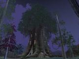 Shadow Oak