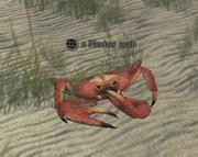 A Nerius crab