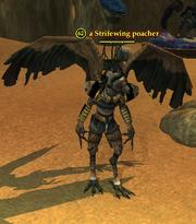 A Strifewing poacher