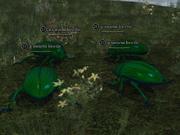 A swarm beetle
