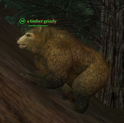 A timber grizzly