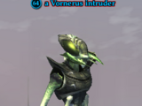 A Vornerus intruder