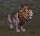 A savanna lion
