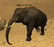 A war elephant (Maulic's Stronghold)